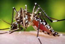What is dengue