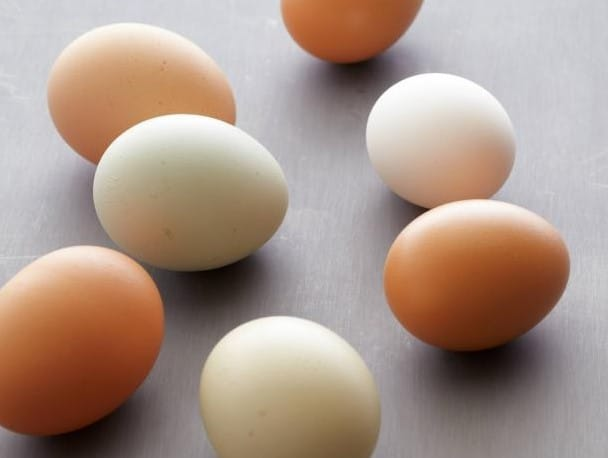 slow-digesting-egg-protein