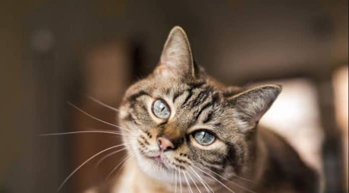 Importance of Understanding Your Cat