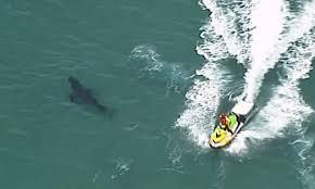 shark vs surfer 3